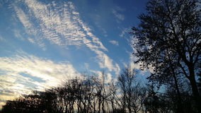 Floating beautiful clouds in the sky above the trees. stock video footage