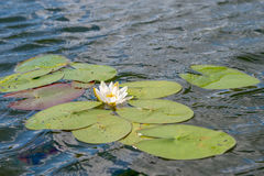 Floating beauty Royalty Free Stock Image