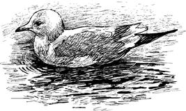 Floating bird. Vector image of a floating sea gull Stock Image