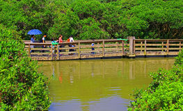 Floating boardwalk at wetland park in hong kong Royalty Free Stock Photography