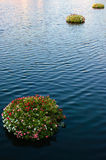 Floating Bouquets. Set of flower bouquets floating over a rippled body of water Stock Photos