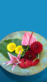 Floating bowl of flowers Stock Images