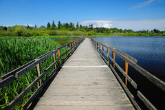 Floating bridge on swan lake Stock Photos