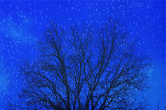 Floating bubbles with black tree branches. A royal blue background in floating bubbles silhouette a winter bare oak tree Stock Photo