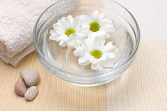 Floating chrysanthemums. Bowl with water and floating chrysanthemums, towel, stones Stock Photography