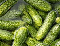 Floating cucumbers Stock Photos