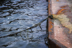 Floating dock of rusty metal and a mooring rope at the pier in t Royalty Free Stock Photo