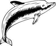 Floating dolphin (black-and-white illustration) Royalty Free Stock Images
