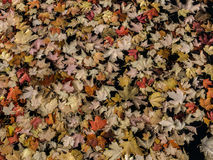 Floating Fall Colors Royalty Free Stock Images