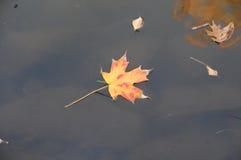 Floating Fall Foliage Stock Image