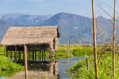 Floating Farm ,  inle lake in Myanmar (Burmar) Royalty Free Stock Images