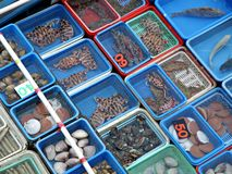 Floating fish market in Sai Kung Hong Kong. Seafood choices from Floating fish market in Sai Kung Hong Kong stock image