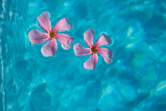 Floating flower Stock Photography