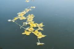 Floating flower Stock Images