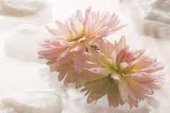 Floating flower spa design Royalty Free Stock Image