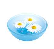 Floating Flowers Stock Photography