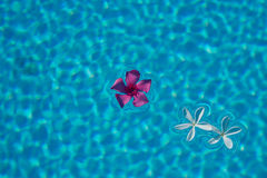 Floating flowers Royalty Free Stock Photography