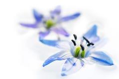 Floating flowers Stock Image