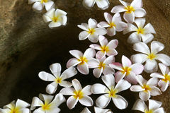 Floating flowers Royalty Free Stock Images