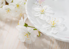 Floating flowers ( Cherry blossom) in white bowl. Royalty Free Stock Photo