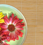 Floating flowers on spa bamboo mat Royalty Free Stock Photos