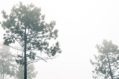 Floating fog Royalty Free Stock Images