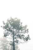 Floating fog Royalty Free Stock Photography