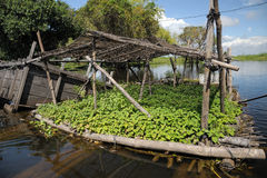 Floating garden on the Tonle Sap Lake Royalty Free Stock Photography
