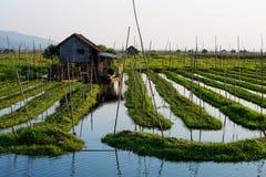 Floating gardens on Inle lake, Myanmar. Floating gardens on Inle lake. Myanmar stock photo