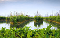 Floating gardens on Inle Lake Royalty Free Stock Photography