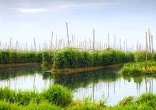Floating gardens on Inle Lake Stock Photo