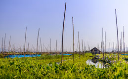 Floating gardens, Inle Lake, Myanmar (Burma). Floating gardens, Inle Lake, Burma (Myanmar Stock Photos