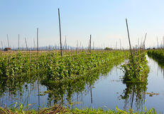 Floating gardens on Inle Lake in Myanmar Royalty Free Stock Photography