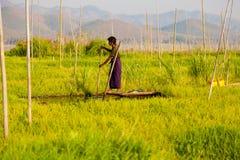 Floating gardens in Inle Lake, Myanmar Royalty Free Stock Photography