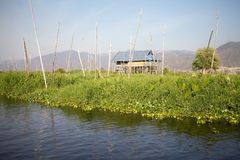 Floating gardens on the Lake Inle Myanmar Stock Photo