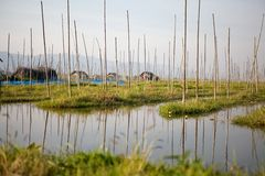 Floating gardens on the Lake Inle Myanmar Stock Photos