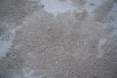 The floating groove of the habitat of Horn-eyed ghost crab or Ocypode on the white sand by the sea.  stock photo