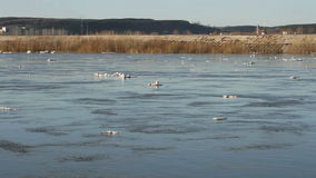 Floating of ice stock footage