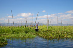 On floating kitchen gardens of the lake Inle. Myanmar Stock Photo