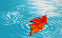 Floating leaf Stock Image
