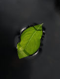 Floating leaf Royalty Free Stock Images