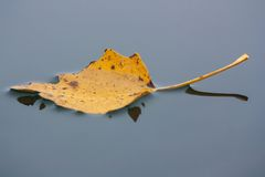 Floating leaf Royalty Free Stock Photography