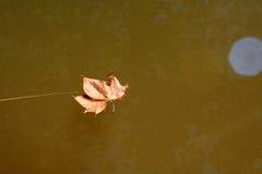 Floating leaf Royalty Free Stock Image