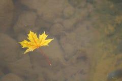 Floating Leaf Stock Photography