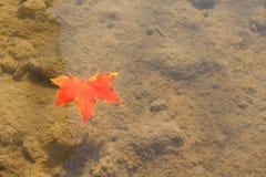 Floating Leaf Stock Photos