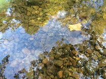 Floating leaf on pebble Creek stream water. A single Mapleleaf floats on top of a creek, showing Clearwater and pebbles underneath the surface. The reflection of Stock Photography