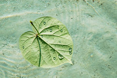 Floating leaf on a pristine sea Stock Images