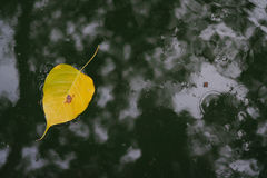 Floating leaves. Leaves floating left under wooden shade Royalty Free Stock Image