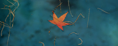 Floating leaves Stock Image