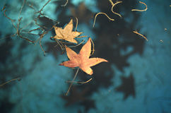 Floating leaves Stock Images
